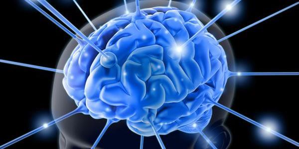 brain.function