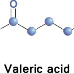 valeric-pentanoic-acid