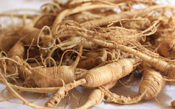 panax-ginseng-root