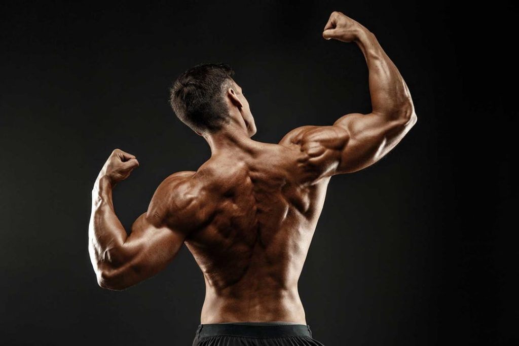 back-muscles-bodybuilding