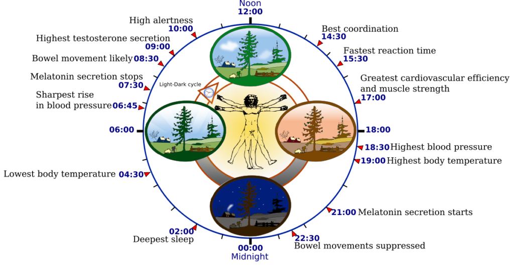 Biological_clock-Circadian_rhythm