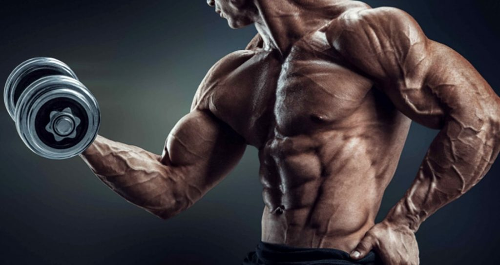 sarms-muscle.gains