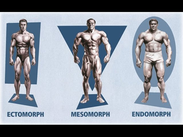 bodybuilding-body-types