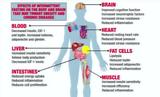 intermittent-fasting-diet-benefits